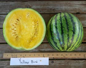 Photo of Yellow Bird watermelon