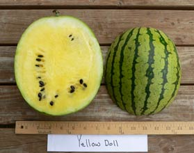 Photo of Yellow Doll watermelon