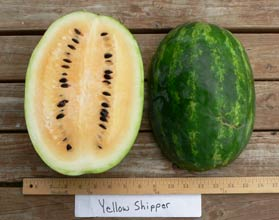 Photo of Yellow Shipper watermelon
