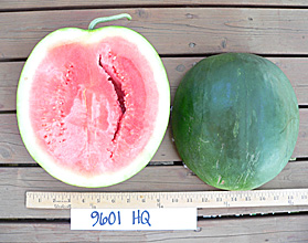 Photo of 9601 HQ (ACX601T) watermelon