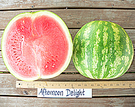 Photo of Afternoon Delight watermelon