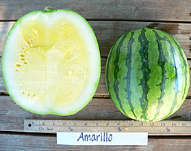 Photo of Amarillo watermelon