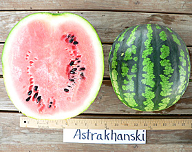 Photo of Astrakhanski watermelon