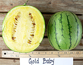 Photo of Gold Baby watermelon