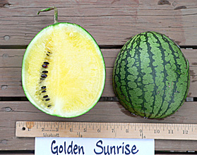 Photo of Golden Sunrise watermelon