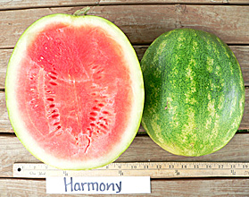 Photo of Harmony watermelon