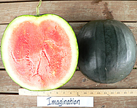 Photo of Imagination watermelon