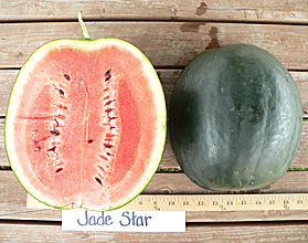 Photo of Jade Star watermelon