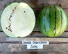 Photo of Japanese Cream Fleshed Suika watermelon
