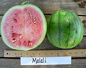 Photo of Malali watermelon