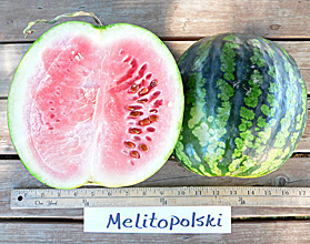 Photo of Melitopolski watermelon