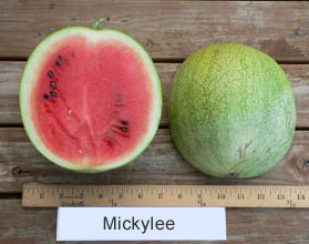Photo of Mickylee watermelon