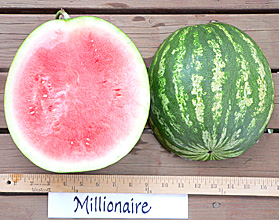 Photo of Millionaire watermelon