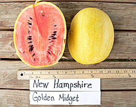 Photo ofNew Hampshire Golden Midget watermelon