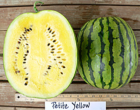 Photo of Petite Yellow watermelon