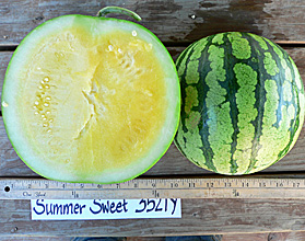 Photo of Summer Sweet 3521Y