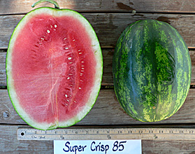Photo of Super Crisp 85 watermelon