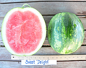 Photo of Sweet Delight watermelon