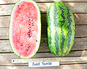 Photo of Sweet Favorite watermelon