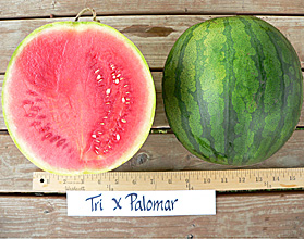 Photo of Tri-X Palomar watermelon