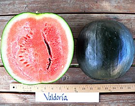 Photo of Valdoria watermelon