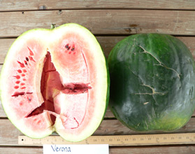 Photo of Verona watermelon