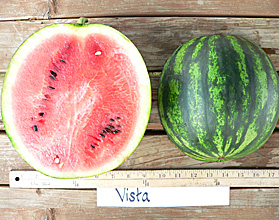 Photo of Vista watermelon