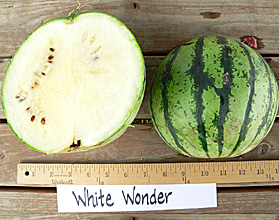 Photo of White Wonder watermelon