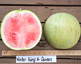 Photo of Winter King and Queen watermelon
