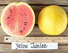 Photo of Yellow Jubilee watermelon