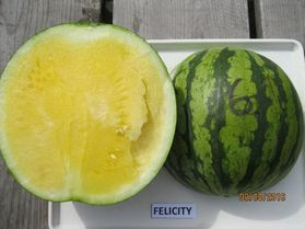 Photo of Felicity watermelon