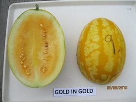 Photo of Gold-in-Gold watermelon