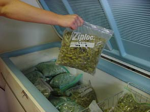 Photo of person putting bagged edamame into freezer
