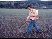 Photo of person applying nematodes with backpack sprayer
