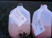 Photo of jugs of beneficial nematodes