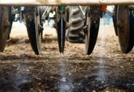 Photo of in-furrow application of nematodes