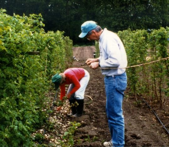Photo of Pete Bristow collecting plant samples