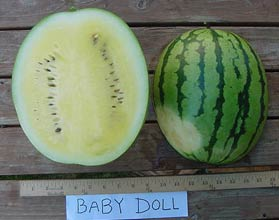 Photo of Baby Doll watermelon