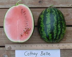 Photo of Cathay Belle watermelon