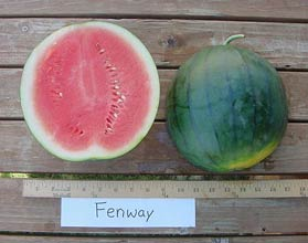 Photo of Fenway watermelon