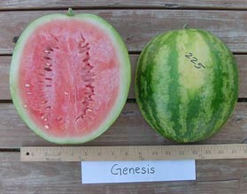 Photo of Genesis watermelon