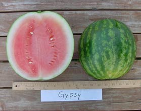 Photo of Gypsy watermelon