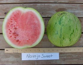 Photo of Navajo Sweet watermelon