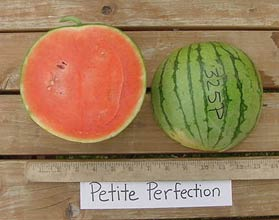 Photo of Petite Perfection watermelon