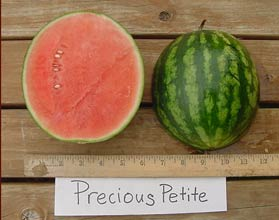 Photo of Precious Petite watermelon