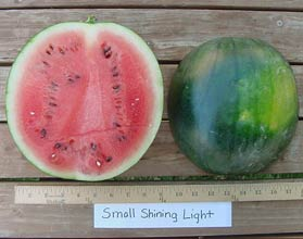 Photo of Small Shining Light watermelon