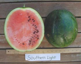 Photo of Southern Light watermelon