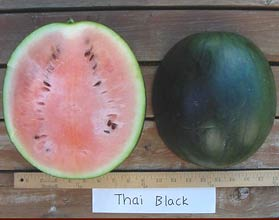 Photo of Thai Black watermelon
